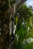 Big reptile on a trunk stock photos