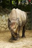 Big Rhino Stock Photos