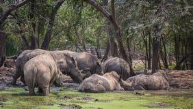 Many rhinoceros in the zoo. A big rhino / rhinoceros in the zoo Thailand stock photo