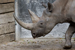 Big rhinoceros Royalty Free Stock Photos