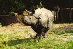 Big rhinoceros close up Stock Images