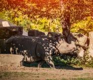 A Big Rhinoceros Royalty Free Stock Photography