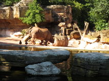 Big rhinoceros. Sunny day nature royalty free stock photo