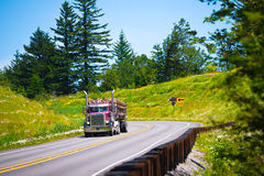 Big rig semi truck with timber on green highway Stock Photos