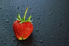 Big ripe berry red strawberry on a dark background water drops c. Opy space for text and logo Royalty Free Stock Photo