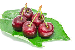 Big ripe dark cherry sweet juicy berries with water droplets Stock Image