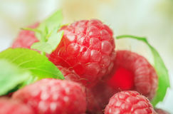 Big ripe fresh raspberry Royalty Free Stock Photo
