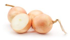Big ripe onions. Stock Photo