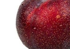 Big red plum closeup. Big ripe red plum with water drops closeup Stock Images