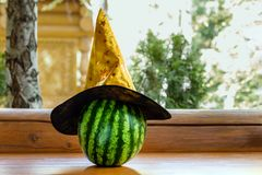 Big ripe striped watermelon in witch hat on wooden bench outdoor. Preparation for unusual halloween concept royalty free stock images