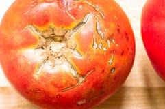 Big ripe tomato Stock Images