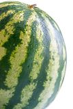 Big ripe watermelon with water drops Stock Photography