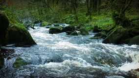 Big River In Ancient Forest. ACTUAL VIDEO IS VERY SHARP - Heavy flowing river through an old growth forest
