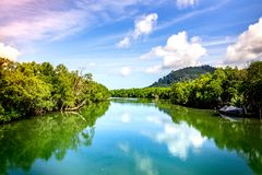Big river with mangrove forest and bright sky. Big river with mangrove forest and bright sky in southern Thailand Royalty Free Stock Photo