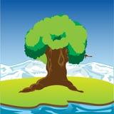 Big riverside tree Royalty Free Stock Photo