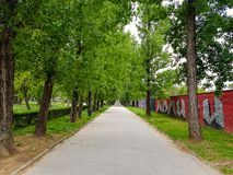 Big road through row of trees in city park stock photography