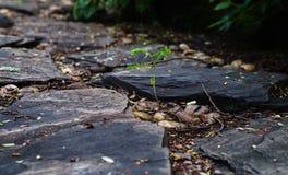Big rock around little plant on ground Stock Photo