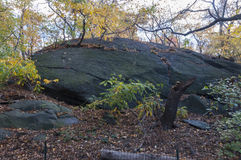 Big rock on garden in Central Park, New York. Photo shot from inside Central Park in New York Royalty Free Stock Photos