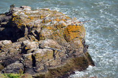 Big rocks with jumpboards to the sea in Howth peninsula Royalty Free Stock Image