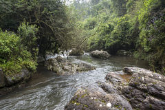 Big rocks in  river in green forest jungle area Stock Images