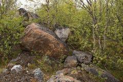 Big rocks in tundra Stock Photos