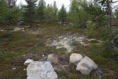 Big rocks in tundra Stock Photography