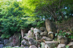 Big rocks under trees in wild. Big rocks under trees in wild on summer royalty free stock photo