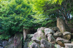 Big rocks under trees in wild. Big rocks under trees in wild on summer in the park royalty free stock photos