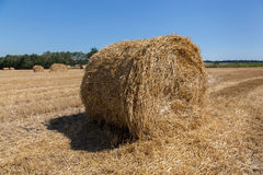 Big roll harvested straw on the mown field. Round bale of straw close-up. Rural landscape Royalty Free Stock Photography