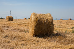 Big roll harvested straw on the mown field. Round bale of straw close-up. Rural landscape Royalty Free Stock Images