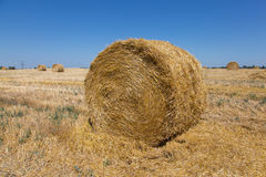 Big roll harvested straw on the mown field. Round bale of straw close-up. Rural landscape Royalty Free Stock Photos