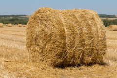 Big roll harvested straw on the mown field. Round bale of straw close-up. Rural landscape Royalty Free Stock Image