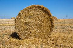 Big roll harvested straw on the mown field. Round bale of straw close-up. Rural landscape Stock Photos