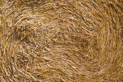 Big roll harvested straw on the mown field. Round bale of straw close-up. Rural landscape Royalty Free Stock Photo