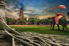 Big root of banyan tree and kingdom elephant dressing against la Stock Photo