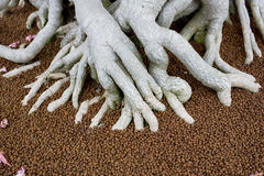 The big roots in fertilizer of Bonsai tree Royalty Free Stock Photo
