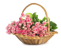 Big Roses Bouquet. branch of pink roses. Isolated Stock Photography