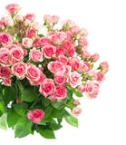 Big Roses Bouquet. branch of pink roses. Isolated Royalty Free Stock Photos