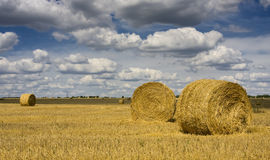 Big round bales of straw. In the field Stock Image