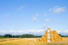 Big round bales of straw in the meadow. Polish countryside lands Stock Photo