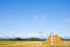 Big round bales of straw in the meadow. Royalty Free Stock Photos