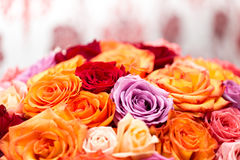 Big round bouquet of colorful roses. Beautiful big round bouquet of colorful roses Stock Image