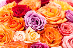 Big round bouquet of colorful roses. Beautiful big round bouquet of colorful roses Royalty Free Stock Images
