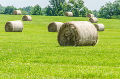 Big round hay bails Stock Photos