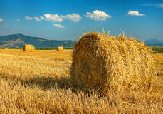 Big round straw bales in the meadow Stock Photography