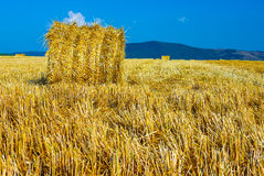 Big round straw bales in the meadow Royalty Free Stock Image