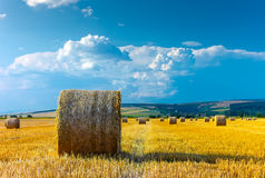 Big round straw bales in the meadow Royalty Free Stock Images