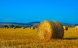 Big round straw bales in the meadow Royalty Free Stock Photo