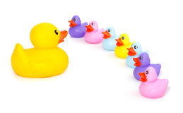 Big rubber duck speaking in front of little rubber ducklings Stock Image