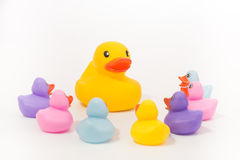 Free Big Rubber Duck Speaking In Front Of A Group Of Little Rubber Ducklings Royalty Free Stock Image - 71720166